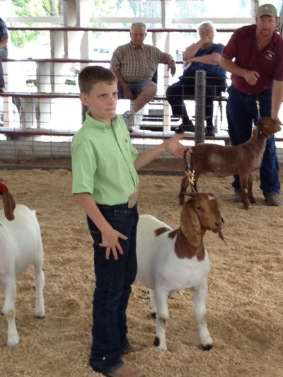 Andrew showing Wylde Green Acres Jingle to a Jr. Reserve Championship at Boernanza