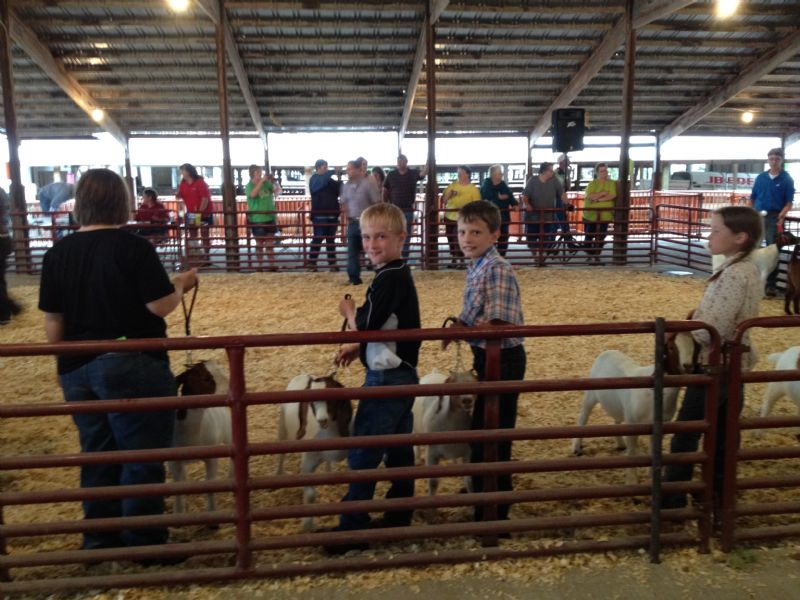 Andrew with his friend, Hayden showing does at Eldon Open Show